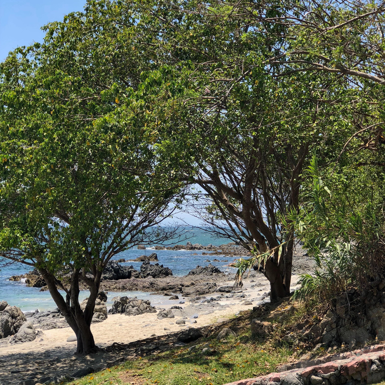 Christmas Tree Lane Los Angeles: Real Del Mar Beach Club Puerto Vallarta Mexico